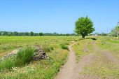 Country Track From Stone To Tree And Houses In Hot Sunny Day