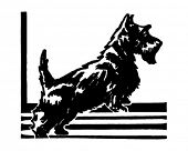 picture of scottie dog  - Scottie  - JPG
