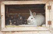 stock photo of rabbit hutch  - Breeding rabbits on a farm in small boxes - JPG