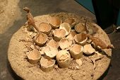 Replica dinosaur nest and eggs with several youngs from the museum