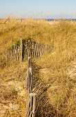 Fence Through Dunes And Sea Oats