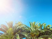 Green coco palm leaves and blue sky background poster