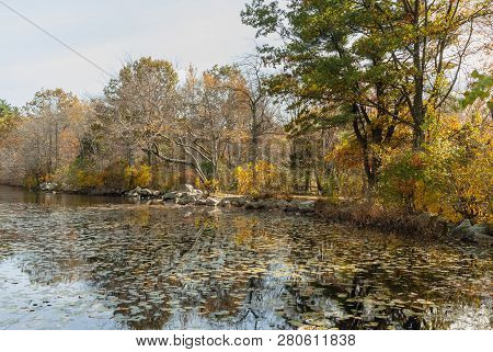 Vibrant Fall Color Along Pond