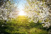 Bright ornamental garden with blooming lush trees on a sunny day. Seasonal background. Soft focus. F poster
