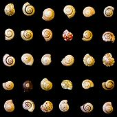 A Diversity Concept Using Mollusk Shells Of Various Patterns And Colors. The Shells Are Arranged On  poster