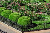 Flowerbed Fenced With A Black Iron Fence With A Footpath Landscape Design With Bushes Of A Blossomin poster
