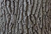 La corteza del árbol