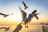 Girl Feeding Food A Seagull In Flight By Hand.gull Bird Flying Hover Come Around To Eat On Beautiful poster