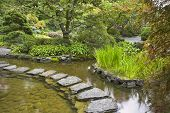 stock photo of stepping stones  -  A path from the wet stones - JPG