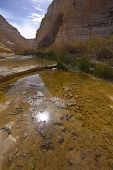pic of boggy  - A boggy part of stream  in the early spring - JPG