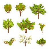 Flat Vector Set Of Fruit Trees And Berry Bushes. Agricultural Plants. Natural Food. Gardening Theme poster