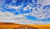 The American prairie in  September. A yellow grass and the American road