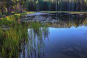 Temprano en la mañana clara de otoño. El lago azul oscuro superficial rodeado de pinos en Yosemite national