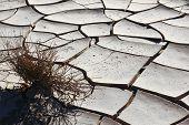 Постер, плакат: Рассвет в долине смерти Небольшой сухой куст в холодный белый трещины почвы
