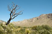 Tejas Canyon and dead tree
