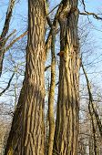 light on tree trunks