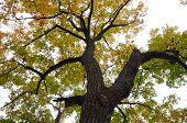 tree trunk and fall leaves