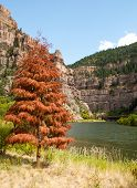 a red pine tree in Glenwood Canyon and rock cliffs
