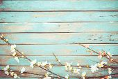 Cherry Blossom Flowers On Vintage Wooden Background, Border Design. Vintage Color Tone - Concept Flo poster