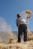 Granjero trabajando con cereales