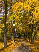 Autumn fall of the leaves in beautiful park, Dubulti,Jurmala, Latvia