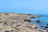 Seals at Big Sur