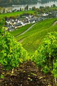 Vineyards  Along The Mosel