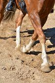 Legs Of A Horse Doing Dressage