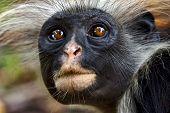 Zanzibar Ape