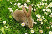 Cute Rabbit On Summer Lawn