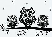 Owl Black 22