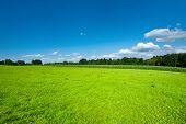 Green Plantation