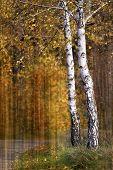 Autumn Trees