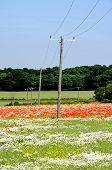 Telegraph poles across fields, Lichfield, England.
