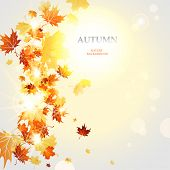 Autumnal background  with space for text