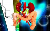 foto of intestines  - Digital illustration of  Intestine in colour  background - JPG