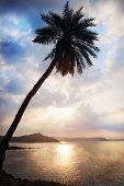 image of karnataka  - Palm tree silhouette near the ocean at cloudy blue sky in Gokarna Karnataka India