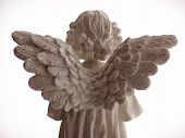 stock photo of cherubim  - angels wings from behind - JPG