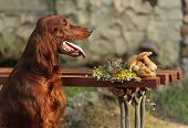 Dog Near To Trophies