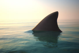 image of fin  - Shark fin above the ocean water with sunset - JPG