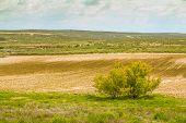 Field Crops In Spain