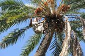 Man Climbing On Palm Tree