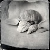 Instagram filtered black and white detail of seashells
