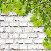 Bright Green Foliage On Background Of A White Brick Wall