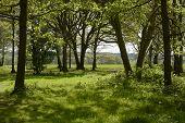 Springtime Woodland. Surrey. England