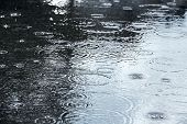 Puddle With Raindrops