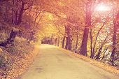Asphalt road in forest. Ukraine, Europe. Beauty world. Retro style filter. Instagram toning effect.