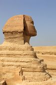 Close Up Of Side View Of Sphinx Cairo