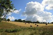 ROund hay bales in a field under a summer sky