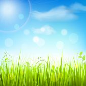 Spring meadow grass blue sky poster